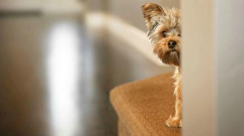 perro con miedo a otros perros