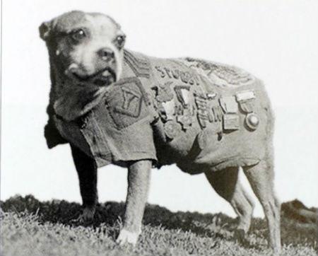 perros famosos stubby
