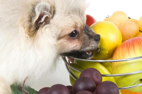 frutas que pueden comer los perros
