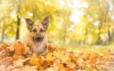 Hidratos de carbono alimentacion perros