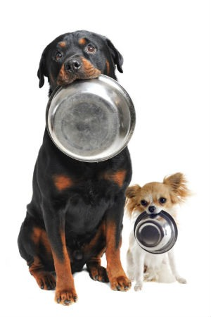 Hidratos de carbono dieta perro