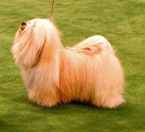 El pelo del perro