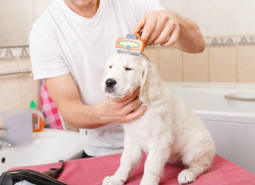 Cuidado del pelo de tu perro con buena alimentacion