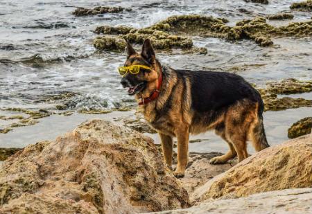 proteger perro del sol