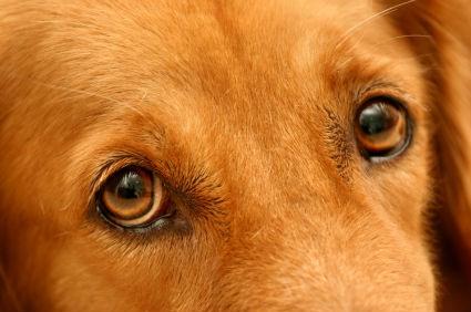 limpiar ojos perros