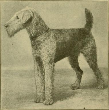 origen del Airedale Terrier
