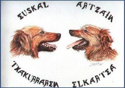 Ilustracion 1995 de las 2 variedades
