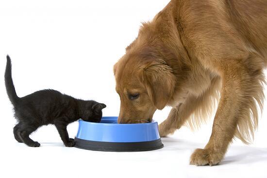 perro-y-gato comiendo