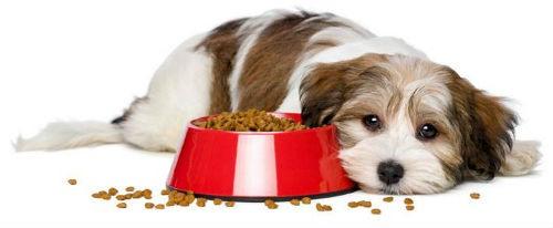mala alimentacion canina