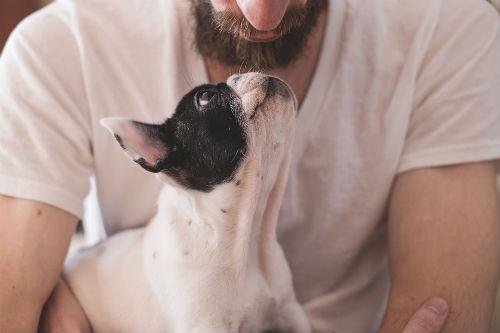 causas enfermedades perros y humanos