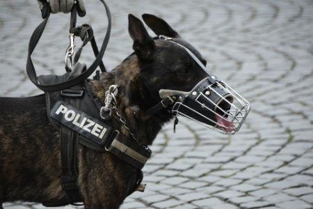 adiestrar perros policia