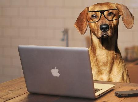 tipos inteligencia canina