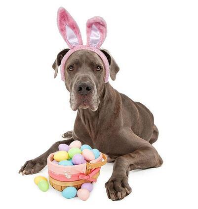 huevos pascua y perros