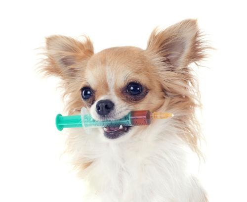 efectos secundarios vacuna perros